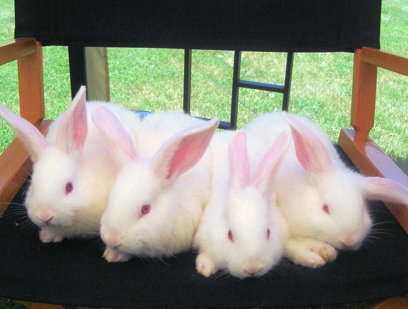 Baby_bunnies